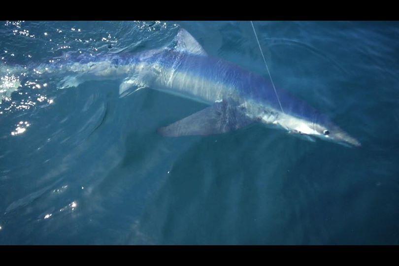 Deep Sea fishing Gloucester Ma