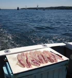 Gloucester Fishing Charters Fillets