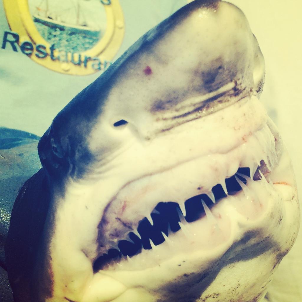 Connemara Bay Fishing Charters shark