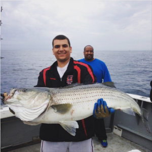 Charter fishing Gloucester 48 inch striped bass